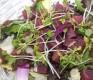 tuna salad[raw]